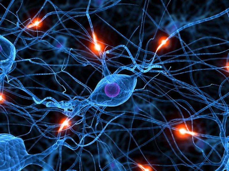 Psicoterapia e plasticità neuronale